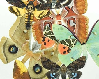 Paper Moths, realistic paper moth cut outs, 10 selected pieces