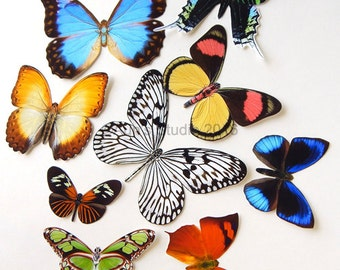 Realistic Paper Butterflies, Set of 10 paper butterfly cutouts, set #3
