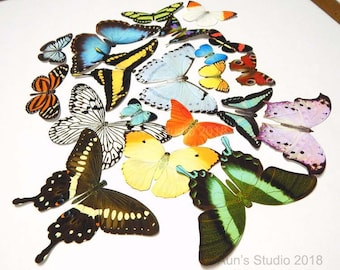 Paper butterflies, Realistic paper butterfly cutouts, Paper butterfly collection 20 pieces
