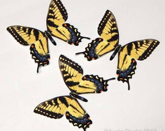 Realistic paper butterfly cutouts, Tiger Swallowtail butterfly, 3 pieces