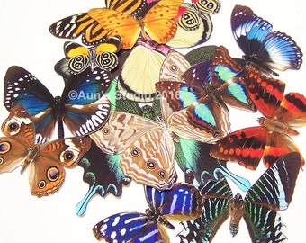 Realistic Paper Butterflies, Ready to use cut outs - 10 pieces