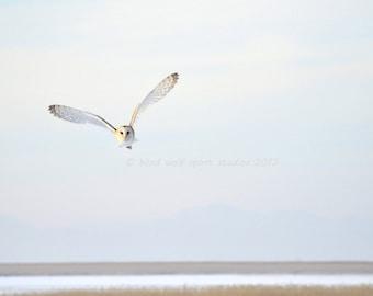 Owl Photography, Bird Photography, Barn Owl in Flight, Woodland, Wildlife Photography, Fine Art Photography