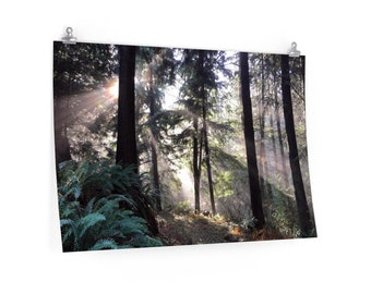 Cascadian Forest Poster