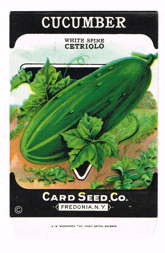 *Original CUCUMBER White Spine Cetriolo CARD SEED Packet Pack 1920/'s Fredonia NY