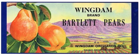 SCOTTY~TARTAN//PLAID~VINTAGE 1940s WALNUT GROVE CALIFORNIA PEAR FRUIT CRATE LABEL