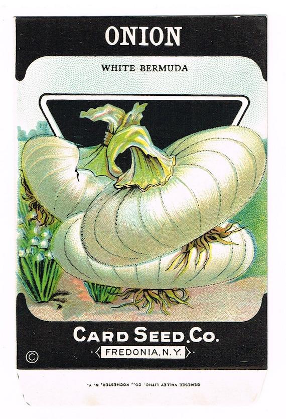 Original vintage seed packet pack NOS c1920 General Store garden folk art Card Seed Fredonia NY Herbs Dill Pickling Jar