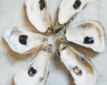 """Premium Blue Point Oyster Shells, 4.25"""" to 5.5"""" set of 6 Oyster Shells Connecticut, Shells for Decoupage Beach Wedding Décor Jewelry Supply"""