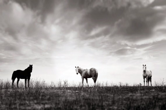 Horse photography, Horses in field, Art, southwest, midwest, country wall decor, country kitchen, equestrian, western, brown, black, white