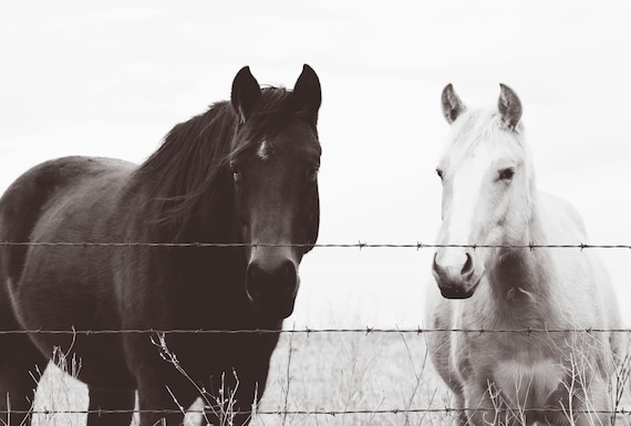 Horse photography - Large Format Prints -  southwest, midwest, wall decor, equestrian, western, black, white, Country Kitchen, farmhouse