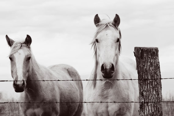 Horse Art - Black and White Horse Photography