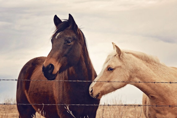 Horse photography - Perfect for country home or country kitchen, southwest, midwest, wall decor, equestrian, western, brown, cream, white