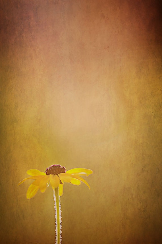 GOLDEN photography print- sunflower, sunshower, light, yellow, sun, summer, sunlight, textures, flowers