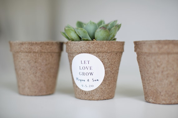 Biodegradable Pulp Containers - Succulent Favor pots - Set of 15 - { succulents not included } Peat Pots