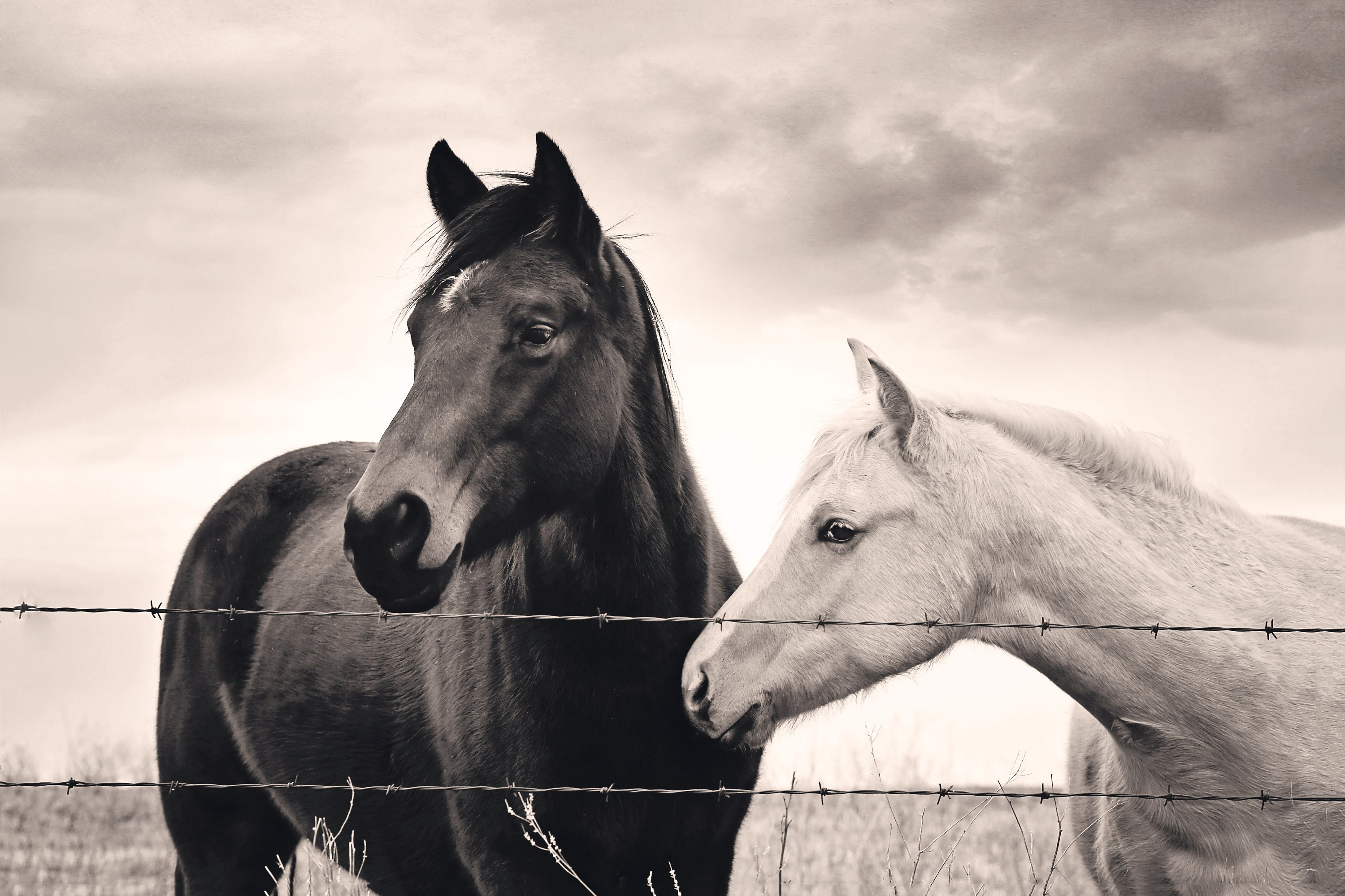 Night Day 2 Horse Photography Southwest Midwest Wall Decor Equestrian Western Black White Country Kitchen Living Room