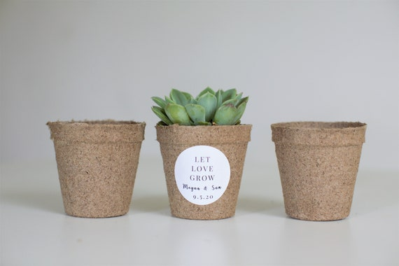 Biodegradable Pulp Containers - Succulent Favor pots - Set of 40  - { succulents not included }