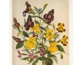 Jane Loudon Mimulus, Monkey Flower Print SALE~~Buy 3, get 1 more Free