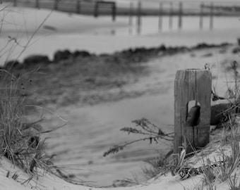 Cape Cod Photography, Sesuit Harbor, Dennis, Massachusetts, Docks, Fence Post, Cape Cod Bay, Wall Art, Home Decor, Beach Cottage Decor