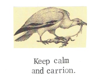 Keep Calm And Carrion Vulture Card | Funny Natural History Vintage Nature Bird Humor Nerdy Gothic Taxidermy Oddities Pun