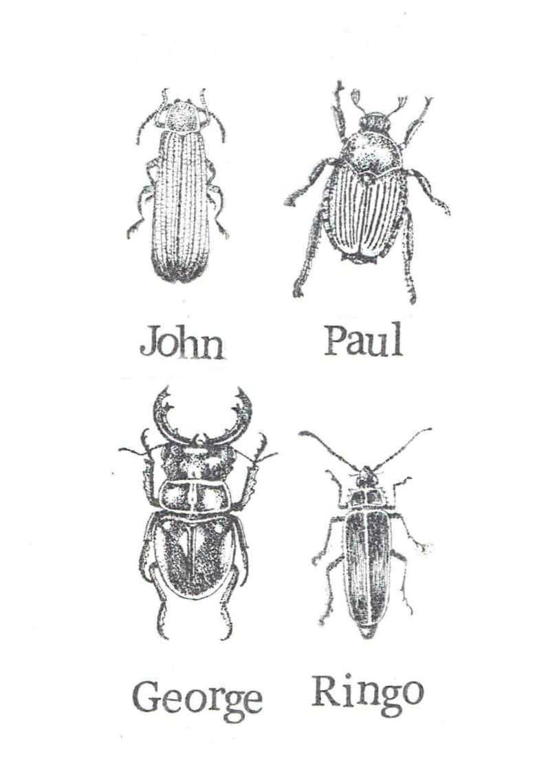 lustige bilder insekten