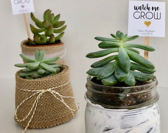 """Printable Custom Mini Succulent """"Watch Me Grow"""" Gold or Silver heart - Favor Plant Sticks - Printed & Shipped"""