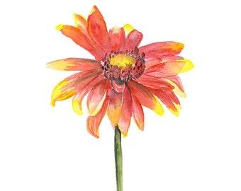 Watercolor Indian Blanket Wildflower - 11 x 14 - Giclee Print - Floral Painting - Flower - Watercolor Print