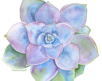 Blue Succulent Watercolor Painting - 11 x 14 - Giclee Print