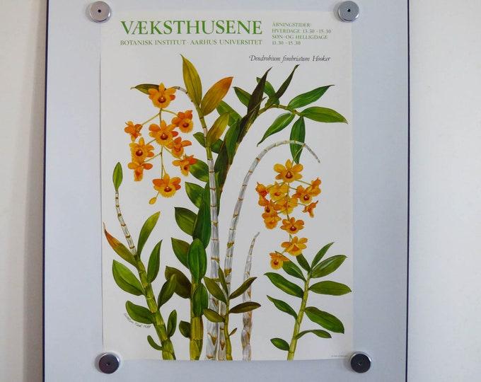 Botanical illustration poster by Kirsten Tind 1987