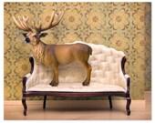 2 FOR 1 SALE - Deer print, woodland decor, deer art, antlers - Barely Domestic