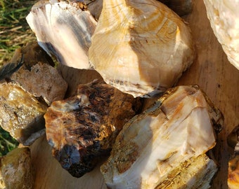 Opalized wood Lot 20 pounds rough rocks petrified fossil agate agatized for slab cab display lbs lapidary white dark striped grain M15