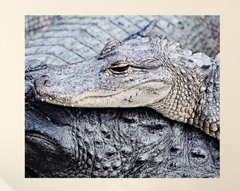 alligator nursery art, reptile decor, wall art canvas, alligator print, canvas print, nature photography, reptile photo, alligator wall art