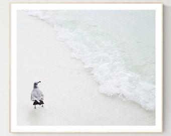 sandpiper sea birds photography prints large coastal wall art ocean decor nautical home coastal beach shore bird prints coastal bathroom art