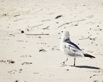 seagull photograph nautical decor coastal wall art neutral beach photography seagull print wall decor fine art bird photography