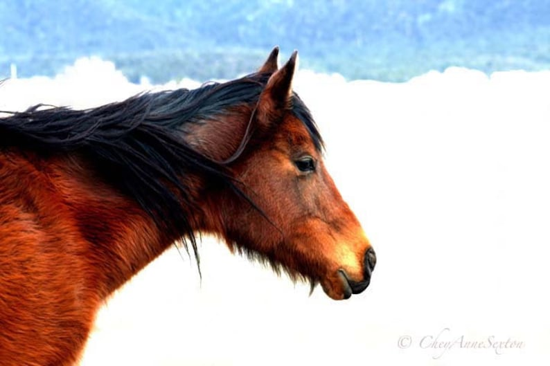 One Horse study warm golden black colors thick winter coat image 0