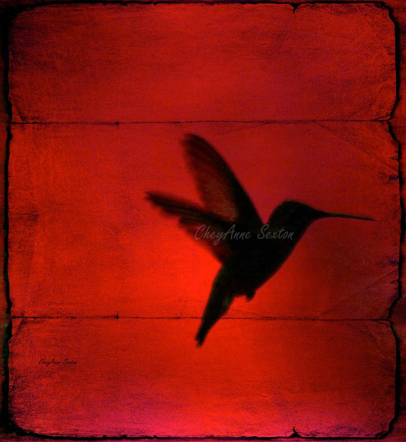 really Red Hmmingbird Behind the Blinds on giclee 8x8 fine art image 0