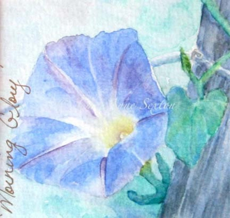 Blue Morning Glory Flower Blossom  Watercolor Giclee 8x8 print image 0