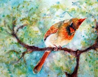 Bird art - SpringTime She Cardinal - Mama Cardinal Bird - 8x10 / 11x14 giclee print