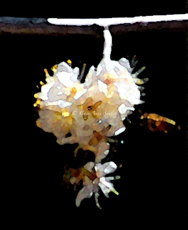 Flower Cluster of golden white flowers w little bee image 0