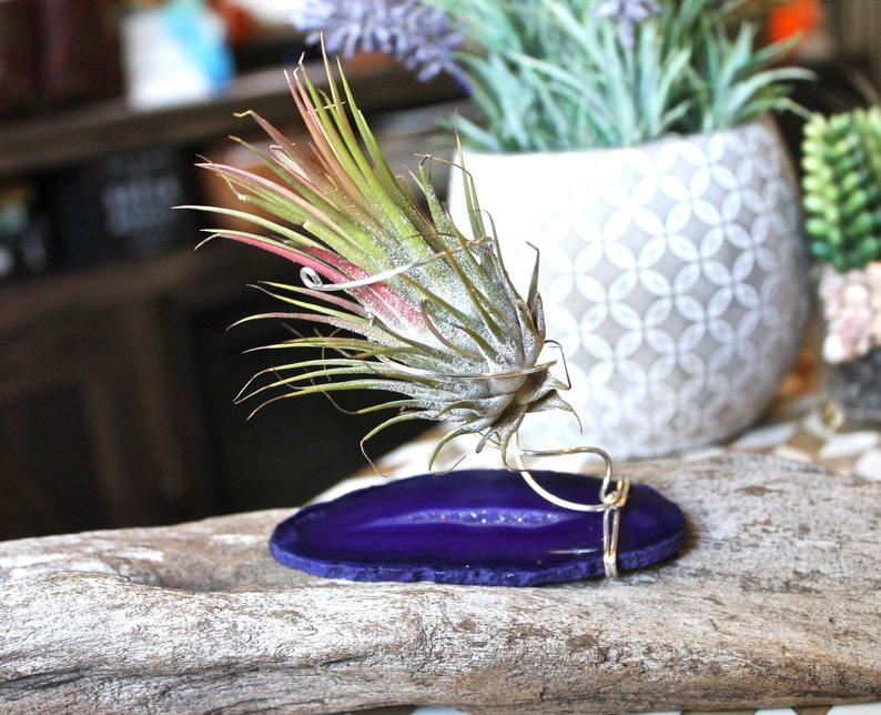 Stone Air Plant Holder w/ Dyed Agate & Silver Wire  Hippie image 0