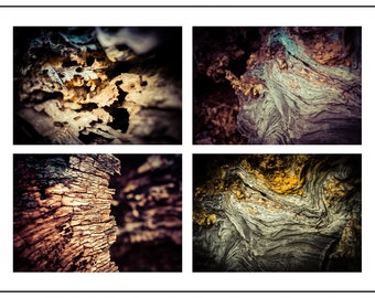 Tree textures - set of four 10x7 inch photographic nature prints