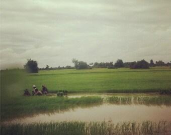 8x8 Fine Art Print: Rice Paddies in Sen Sok (Cambodia)
