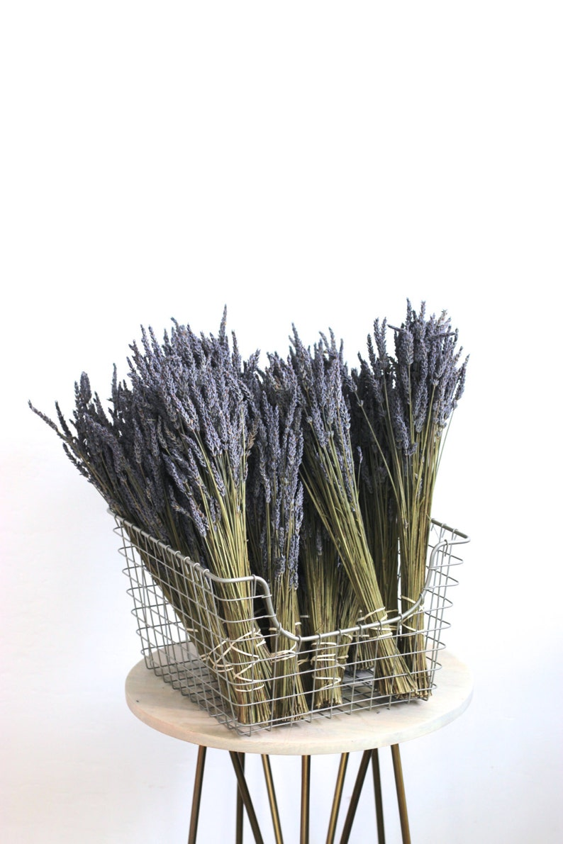 Dried Organic Lavender 10 bunches image 0