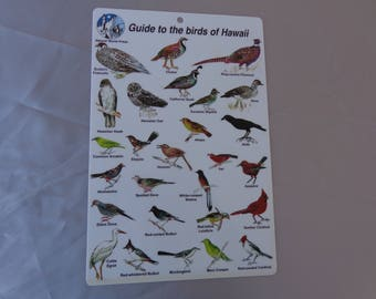 Hawaiian Bird Guide - One laminated pafe of quick guide to the birds of hawaii - great for your trip.  1997  Natural World Press