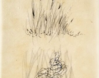 Daily Drawing March 12, 2018 / Tall Grasses  / Mixed Media Drawing with Beeswax