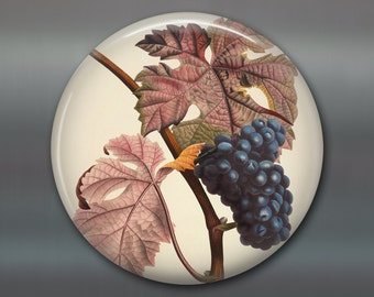 "3.5"" large round magnet with vintage fruit illustration, vintage grape kitchen magnet - decorative magnet for the kitchen - MA-701"