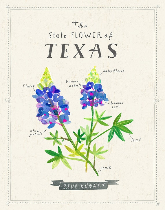 Texas State Flower Print The Bluebonnet Etsy