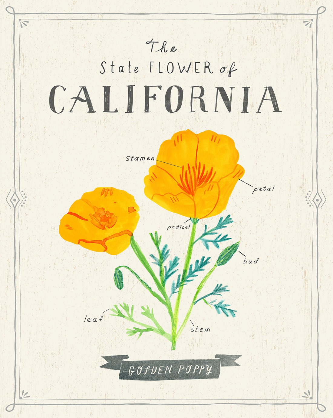California State Flower Print The Golden Poppy Etsy