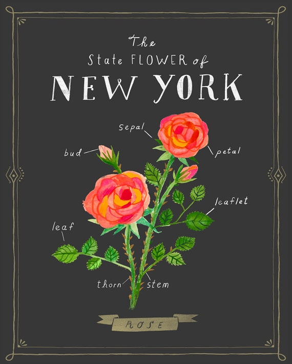 New York State Flower Print The Rose Etsy