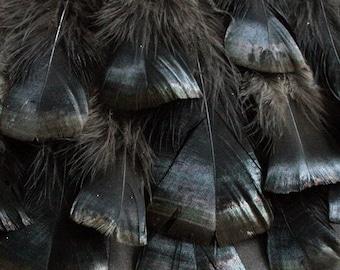 "x16 Feathers - 6 - 8 1/2"", Iridescent Black, Domestic Heritage Turkey - meleagris gallopavo HTF382 HD"