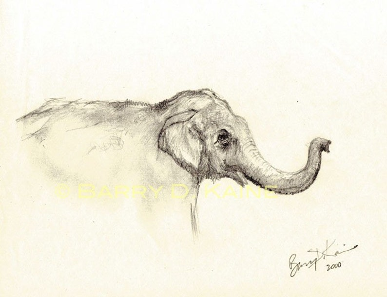 Baby Elephant Face Drawing Print