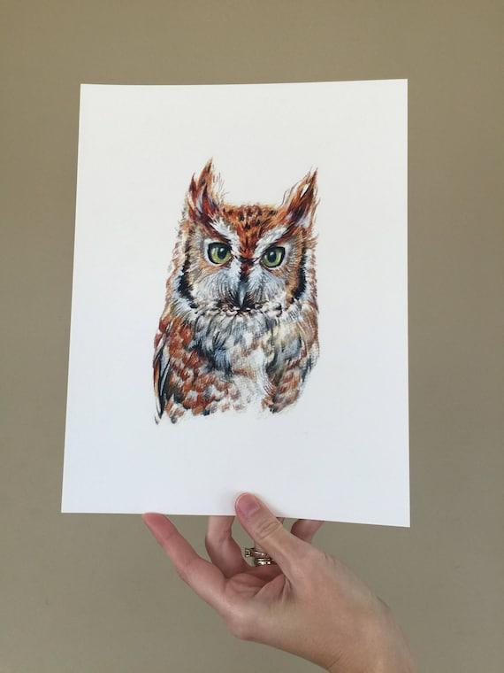 Eastern Screech Owl Portrait Print